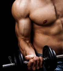 best muscle building exercises for beginners