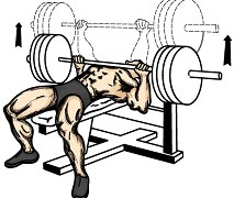 Bench Press Workouts For Beginners – Tips And Advice