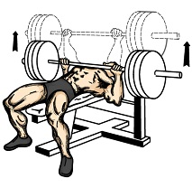 Bench Press Workouts For Beginners